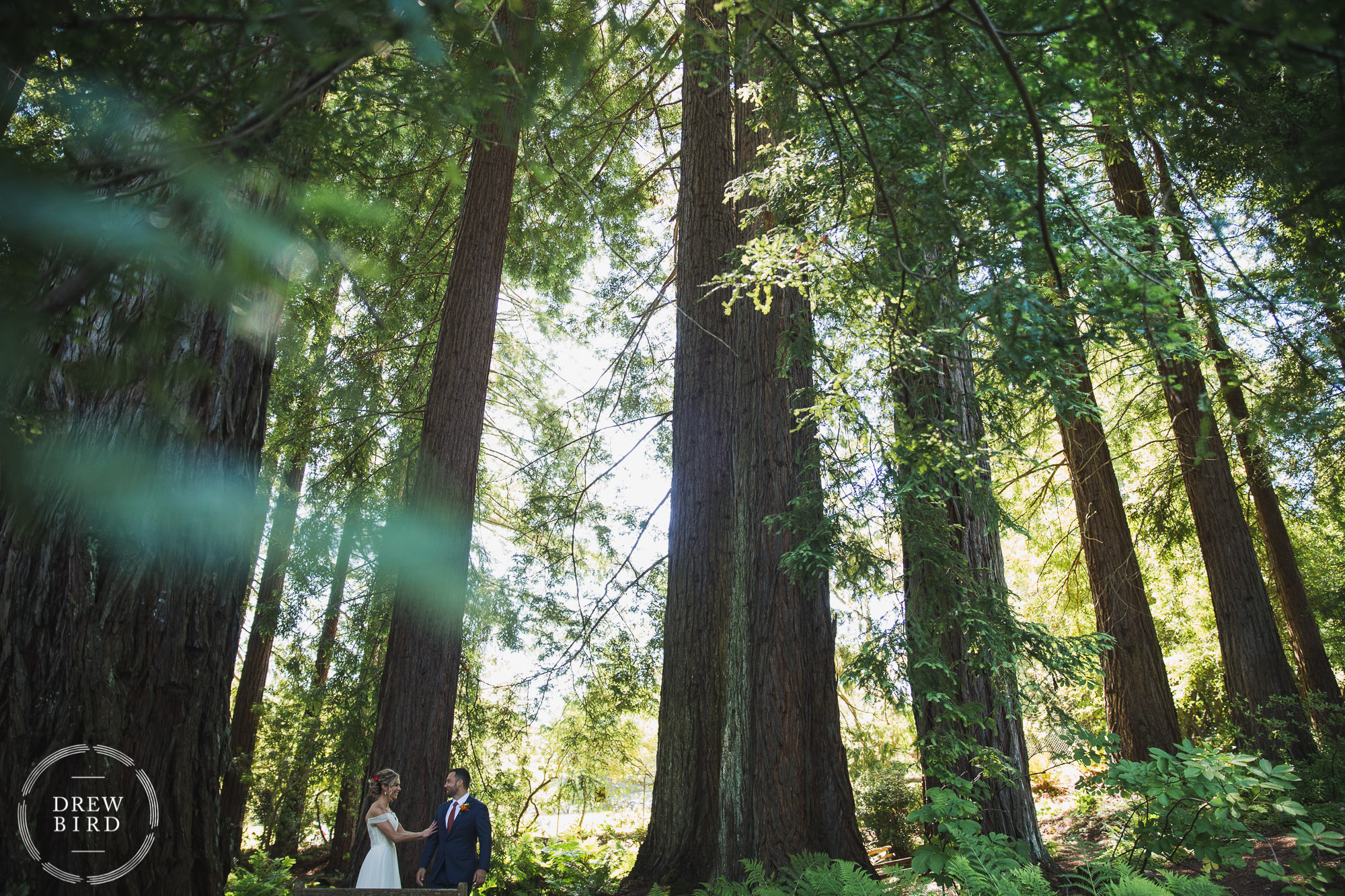 Brazilian room wedding photos. Redwoods wedding photography. Berkeley wedding photojournalism by Drew Bird.